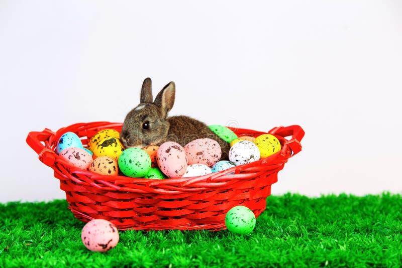 Малый милый зайчик с пасхальными яйцами стоковое фото