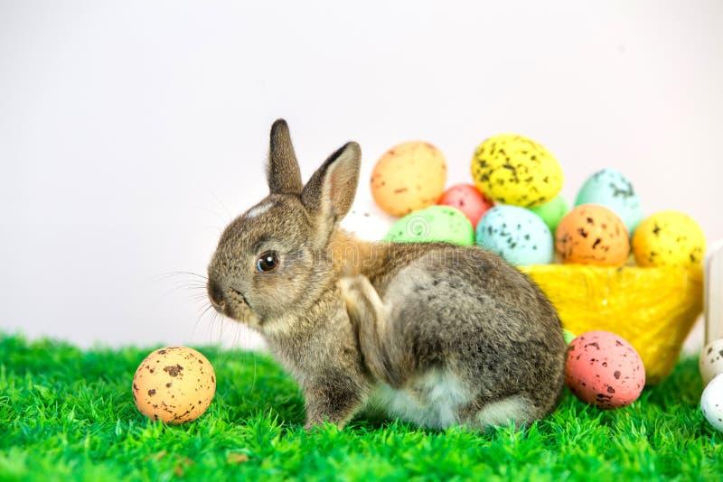 Малый милый зайчик с пасхальными яйцами стоковая фотография rf