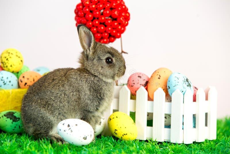 Малый милый зайчик с пасхальными яйцами стоковое изображение