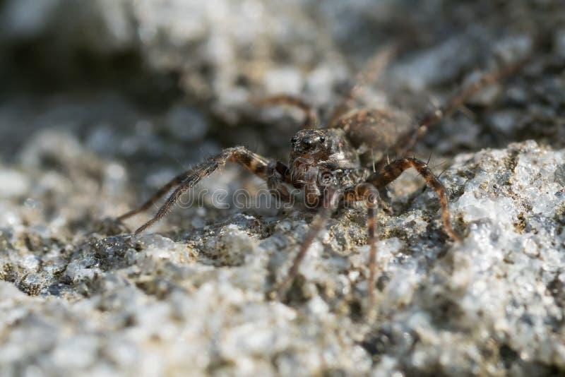 Малый паук на утесе стоковое изображение