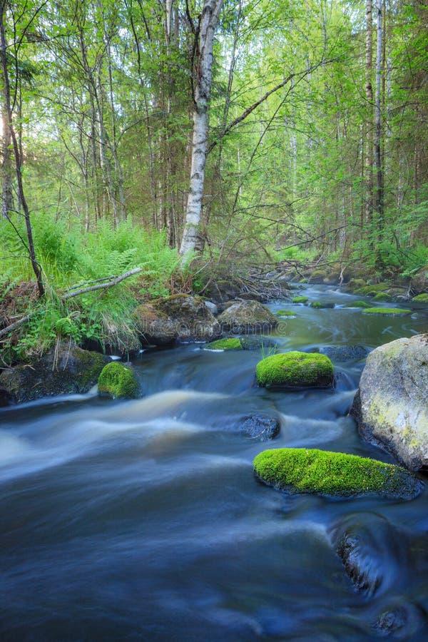 Малый поток в лесе стоковое изображение