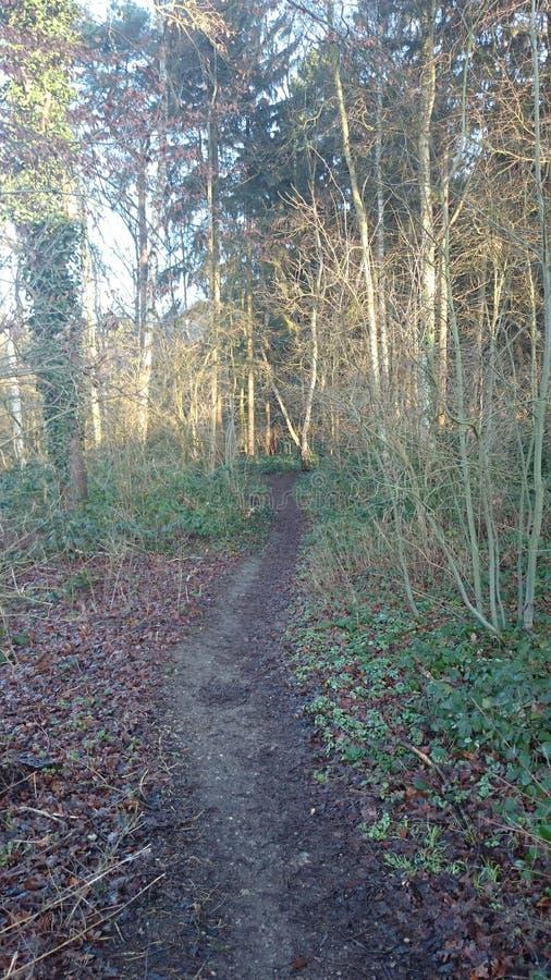 Малый путь в лес стоковое фото