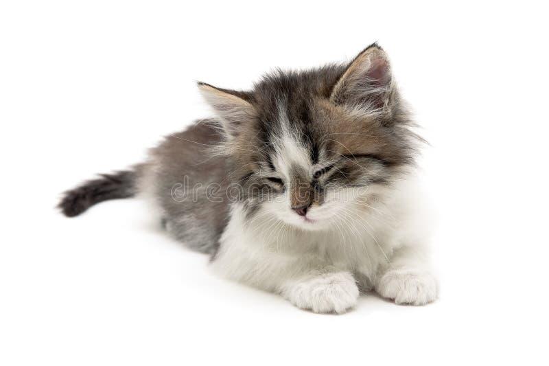 Малый пушистый котенок лежит на белой предпосылке стоковая фотография