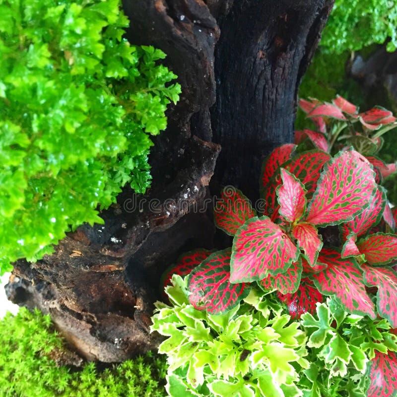 Малый сад заводов стоковое фото rf