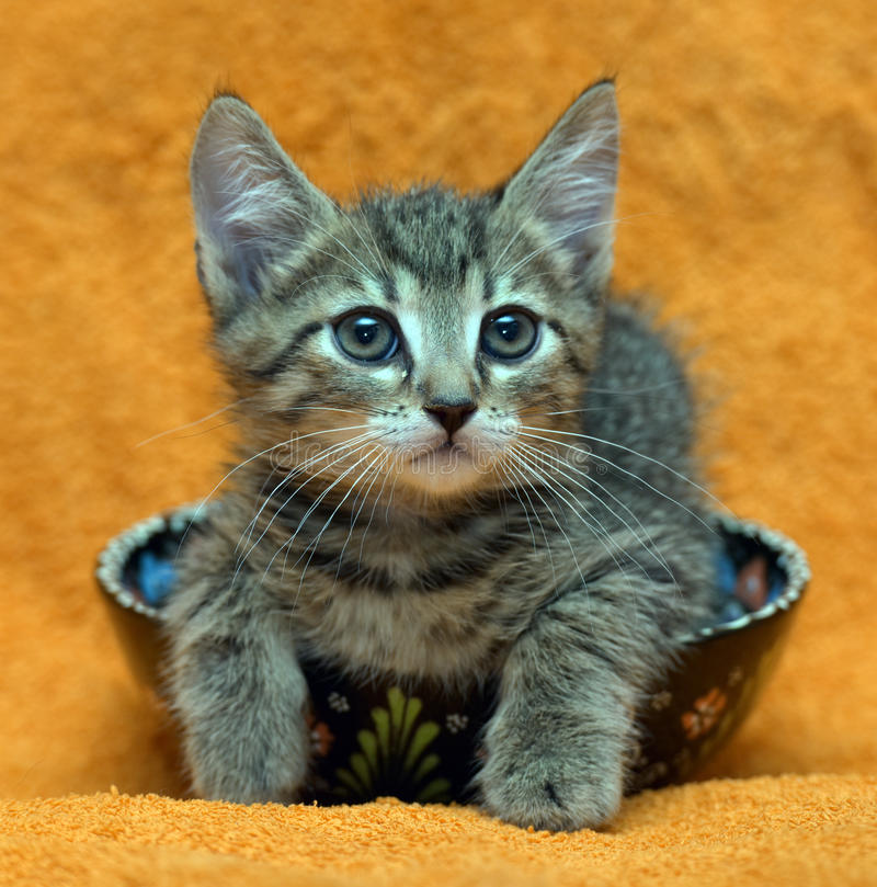 Малый серый striped котенок лежит в плите стоковые изображения rf