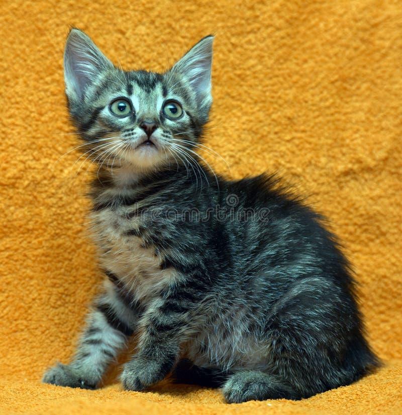 Малый серый Striped котенок стоковое изображение