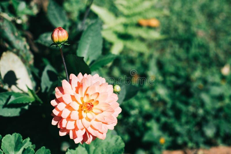 Малый цветок стоковое фото rf