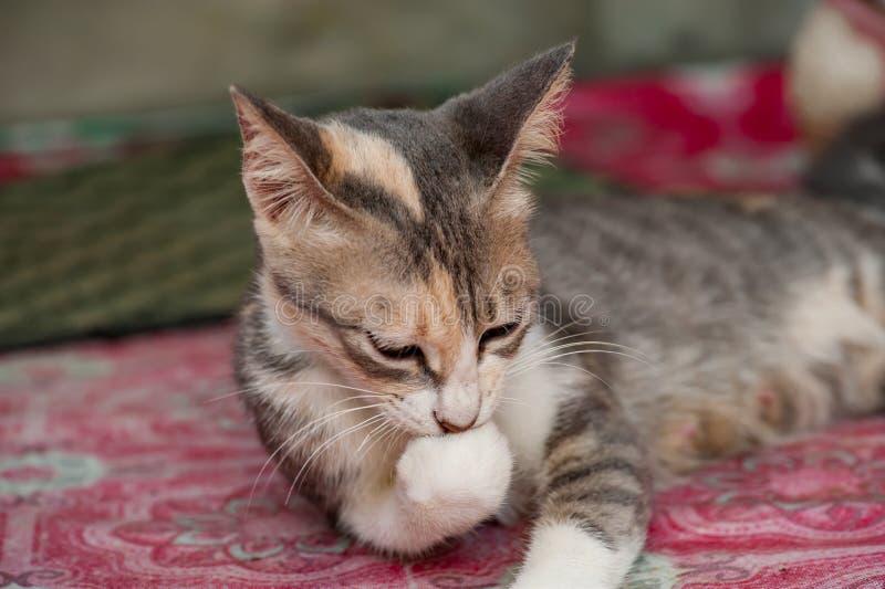 Малый черный белый и милый кот стоковое фото rf