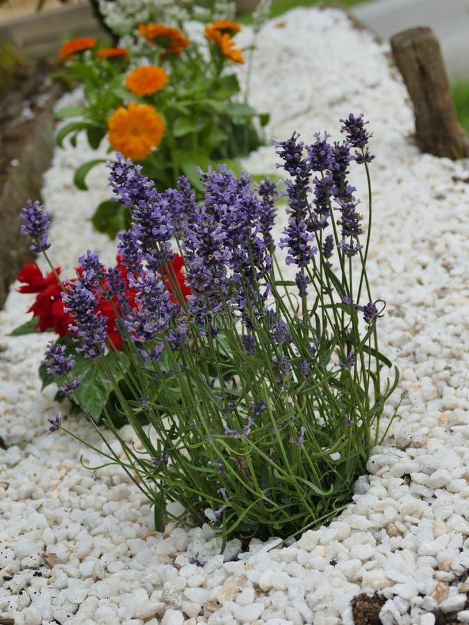 Малый rockery цветка стоковые изображения rf