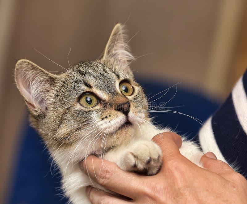 Малый striped котенок с белизной стоковое фото rf
