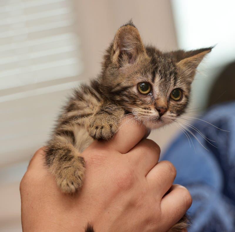 Малый striped котенок стоковое изображение rf