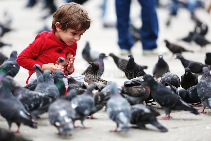 Малыш подавая голуби стоковая фотография