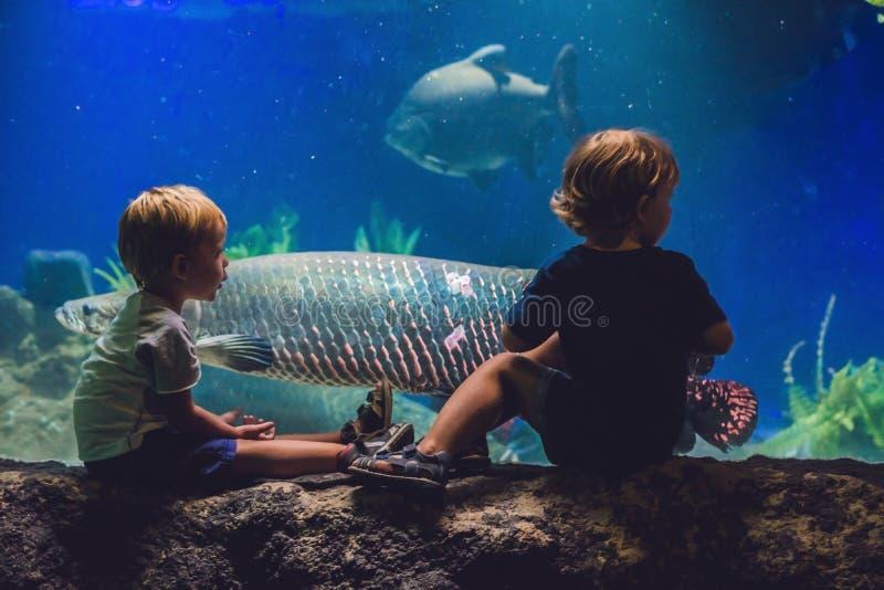2 мальчика смотрят рыб в аквариуме стоковая фотография