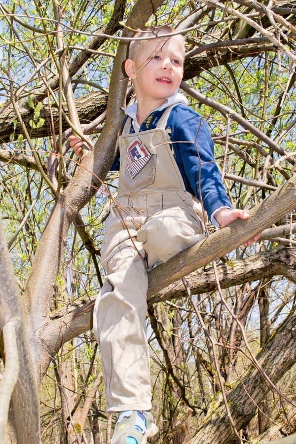 Мальчик в дереве стоковое изображение