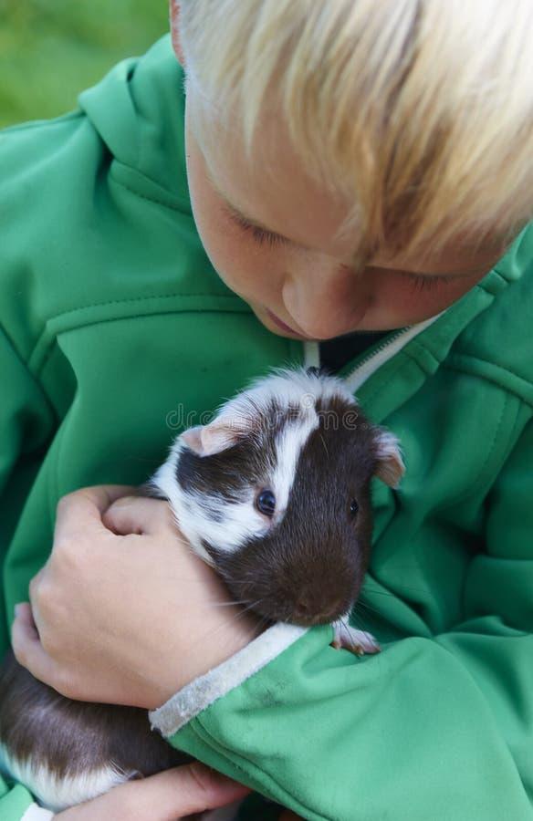 Мальчик держа морскую свинку стоковое фото rf