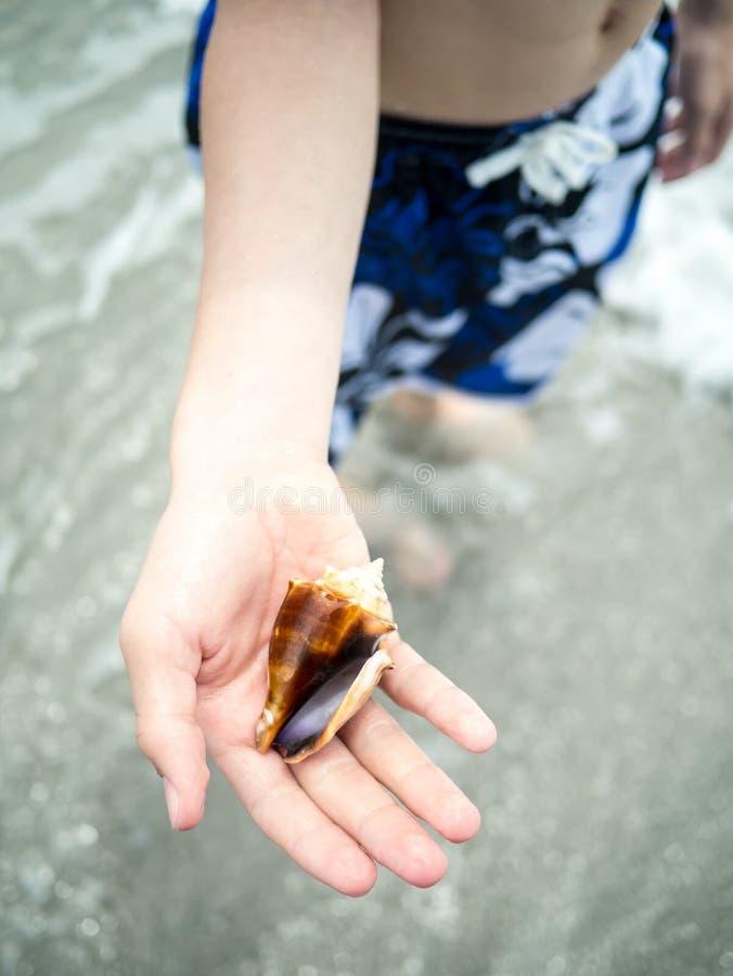 Мальчик держа seashell на пляже стоковая фотография rf