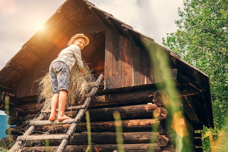 Мальчик кладет сено в сеновал стоковые фотографии rf