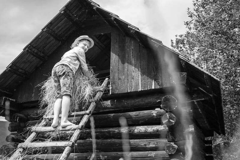 Мальчик кладет сено в сеновал стоковое фото