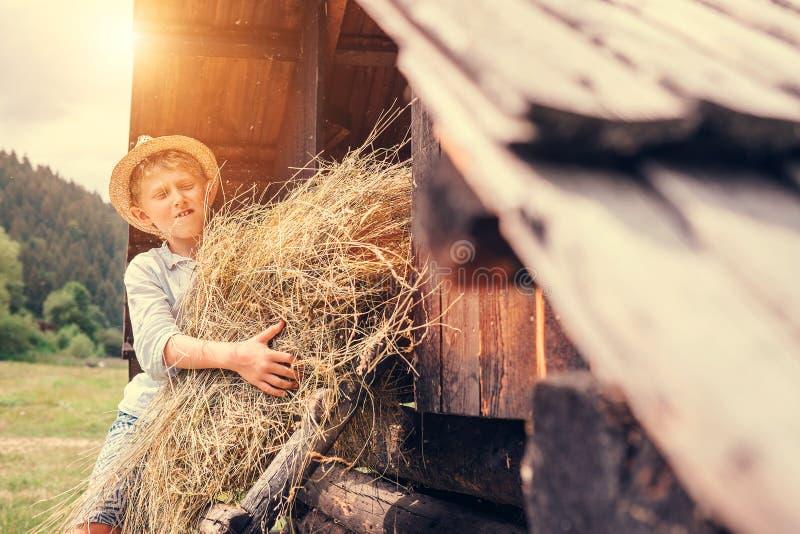 Мальчик кладет сено в сеновал стоковые изображения rf