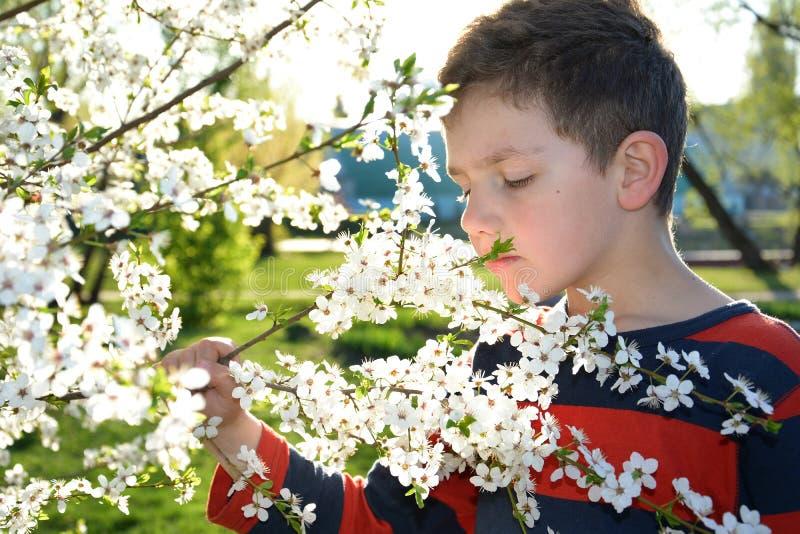 Мальчик пахнуть цветки вишни весны стоковая фотография
