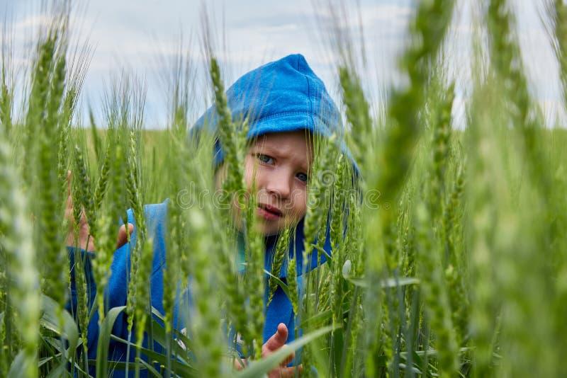 Мальчик спрятал в поле пшеницы стоковые фото