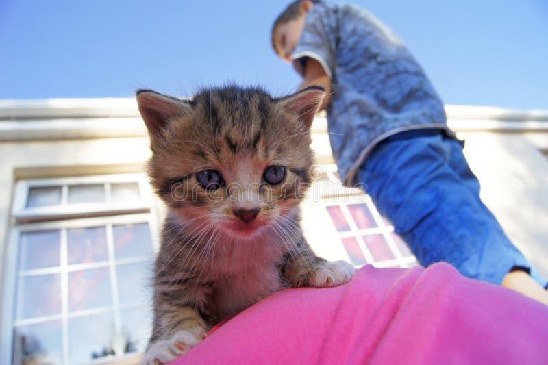 Мальчик с концом вверх по котенку стоковое фото rf