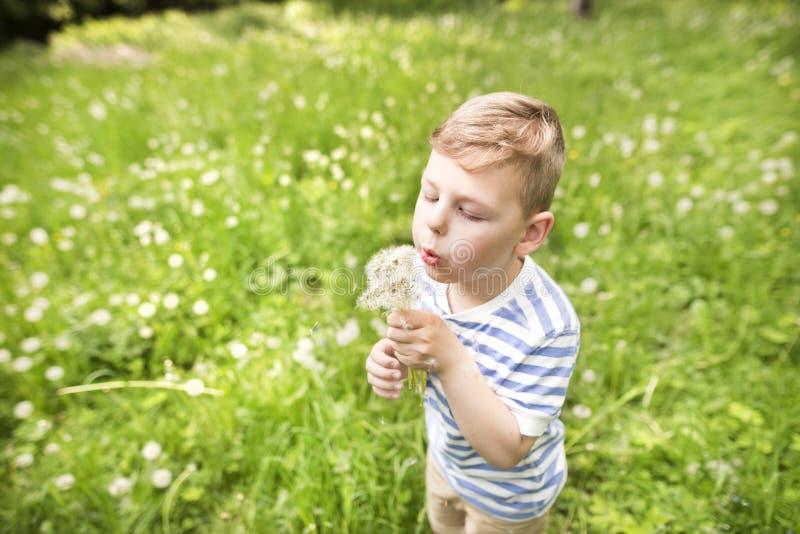 Мальчик Llittle играя на луге, солнечном весеннем дне стоковые изображения rf