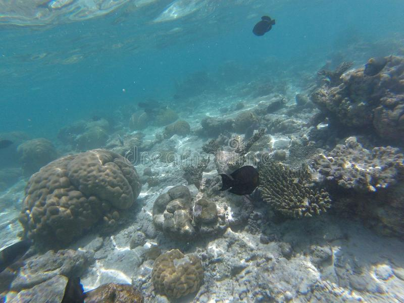 Мальдивские острова стоковое изображение rf