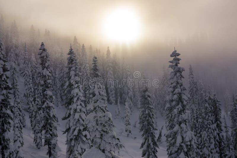 Мглистый заход солнца над слоями снега покрыл деревья в лесе горы стоковые фотографии rf