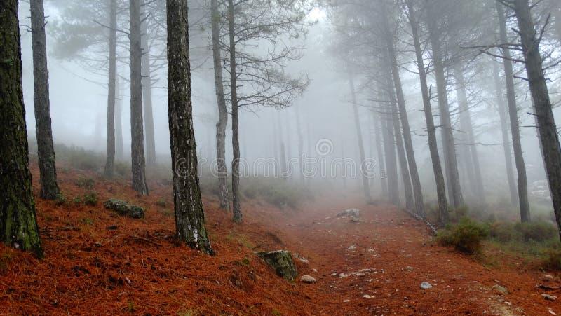 Мглистый туман среди деревьев стоковое изображение rf