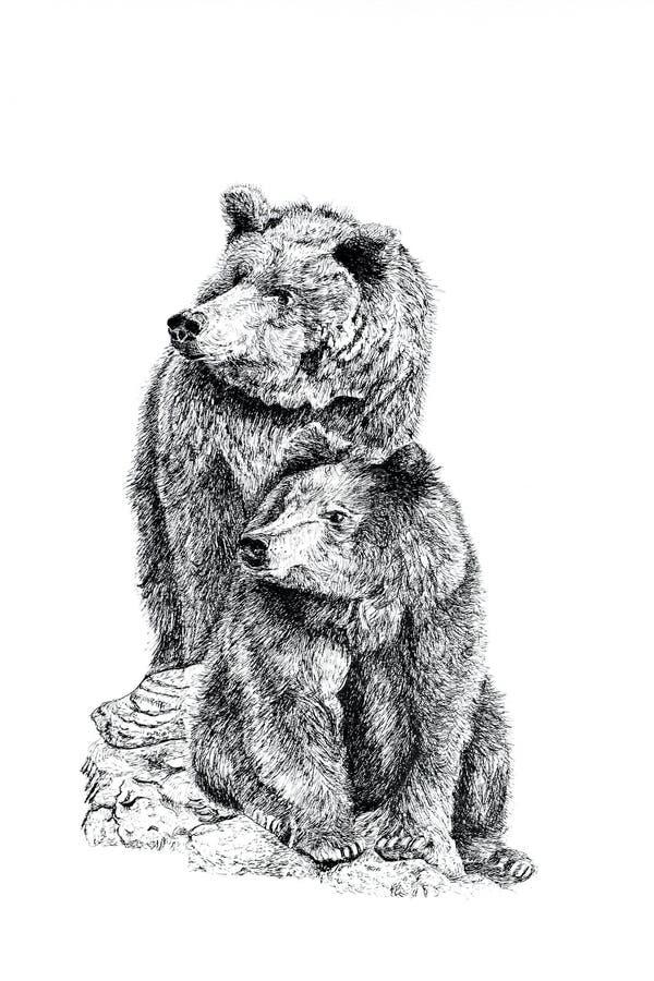 медведи иллюстрация вектора