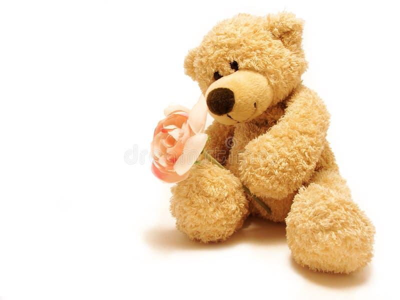 медведь давая розовый игрушечный стоковое фото rf
