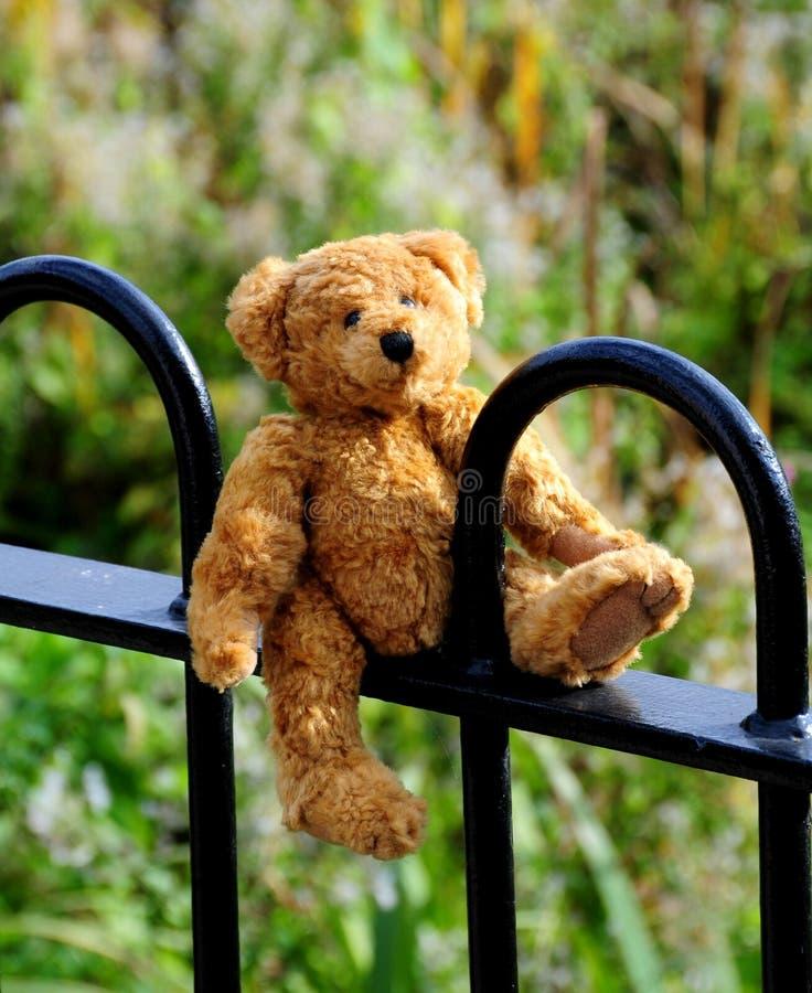 медведь потерял стоковое изображение rf
