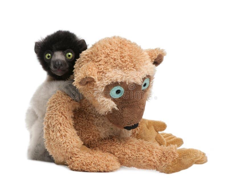 медведь увенчал его детенышей игрушечного sifaka propit стоковое изображение