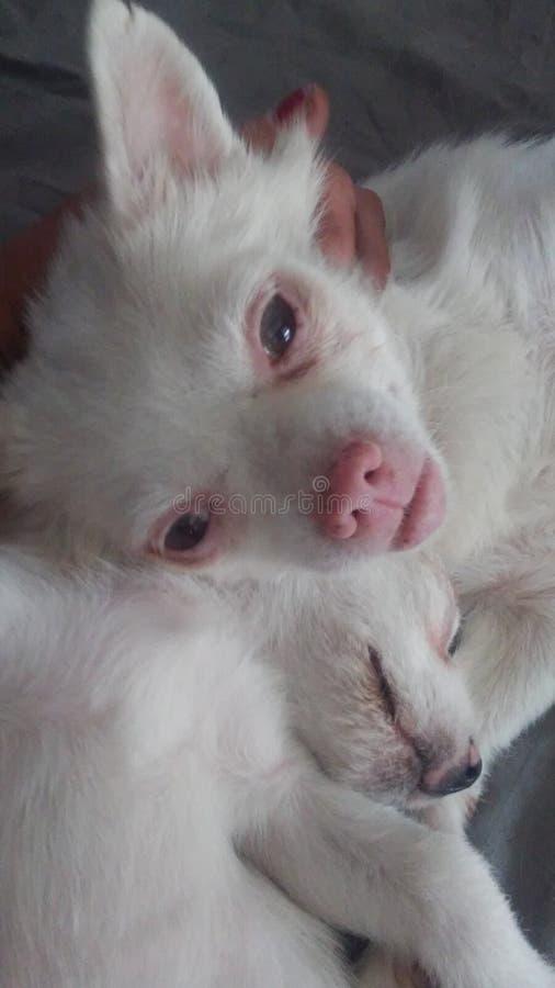 Медведь Lola & Skatter стоковые фото
