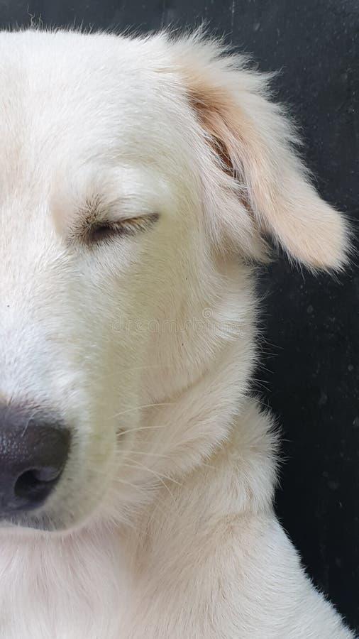 Медитирующая собака стоковые фотографии rf