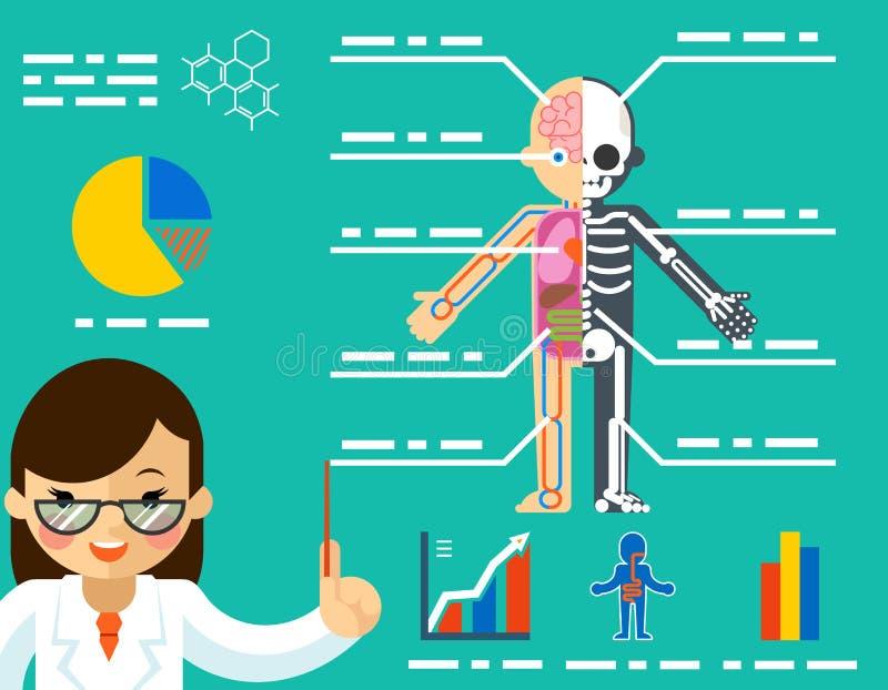 МЕДИЦИНСКАЯ принципиальная схема Женщина доктора показывая анатомию иллюстрация вектора