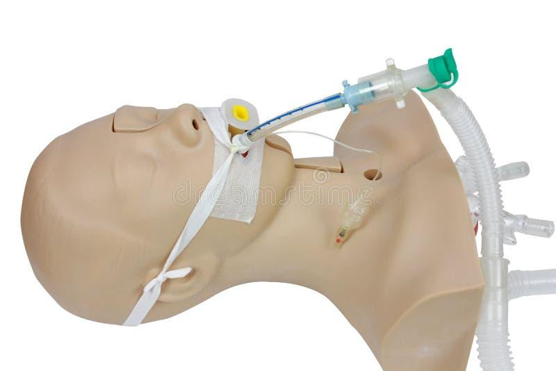 Медицинская тренировка имитации трахеальной интубации искусственный v стоковое фото rf
