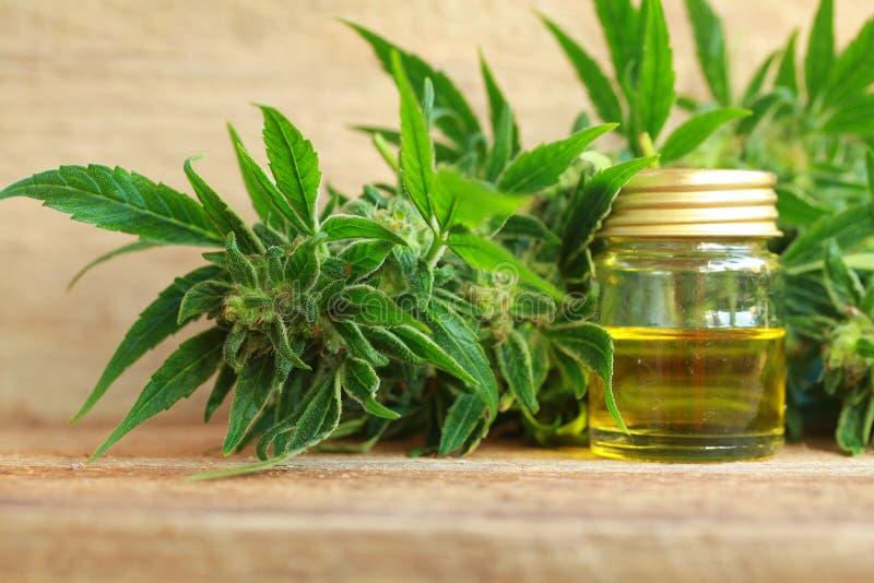 Медицинские выдержка масла конопли и завод пеньки стоковые изображения