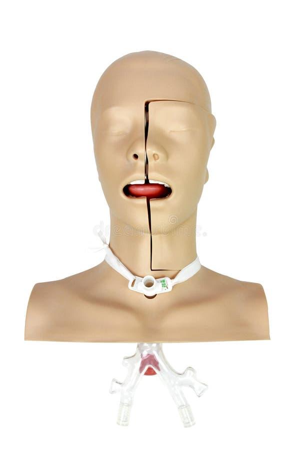 Медицинское treatm хирургического пациента Tracheostomy тренировки имитации стоковая фотография rf