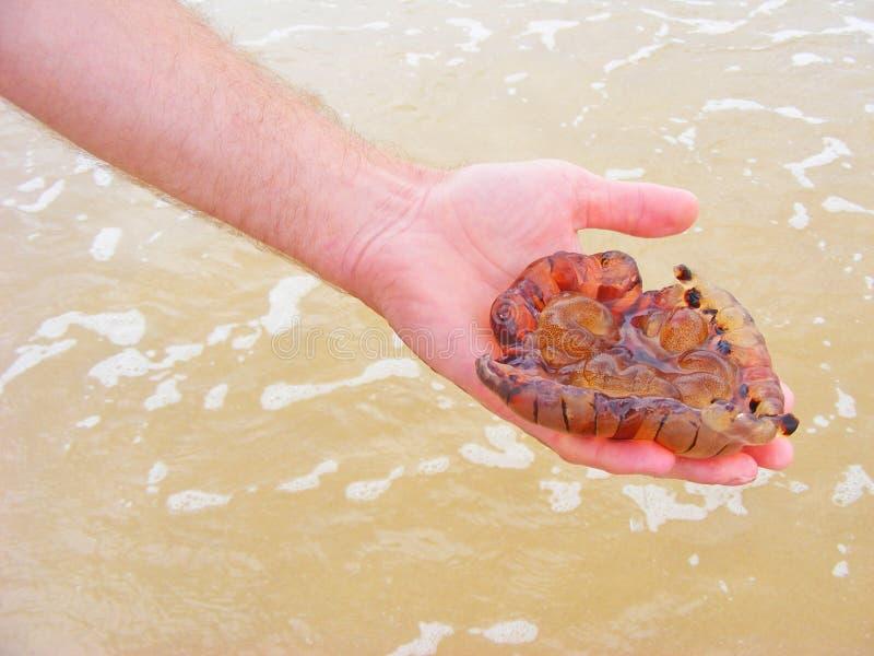 Медуза медуз опасности в руке стоковое изображение rf
