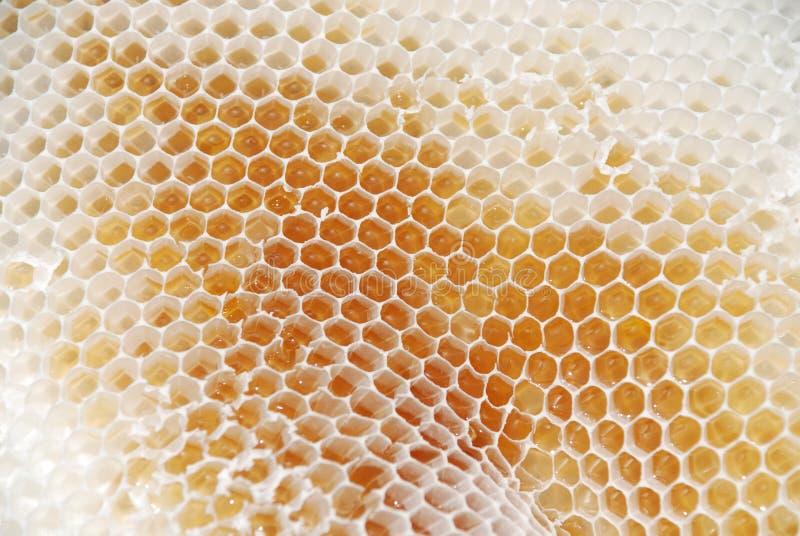 мед гребня стоковое изображение