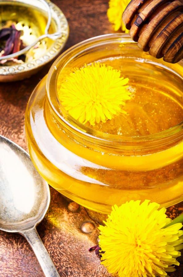 Мед одуванчика и одуванчик цветков стоковые изображения