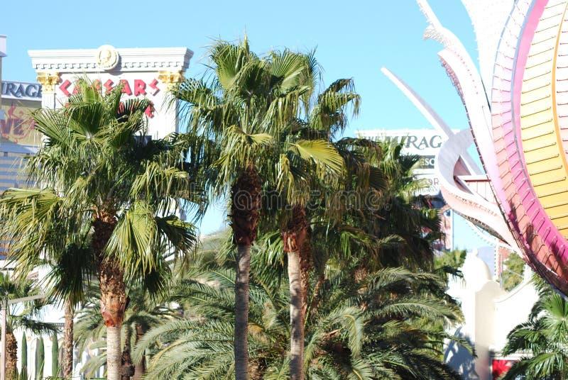 Международный аэропорт McCarran, дерево, пальма, arecales, завод стоковое фото rf