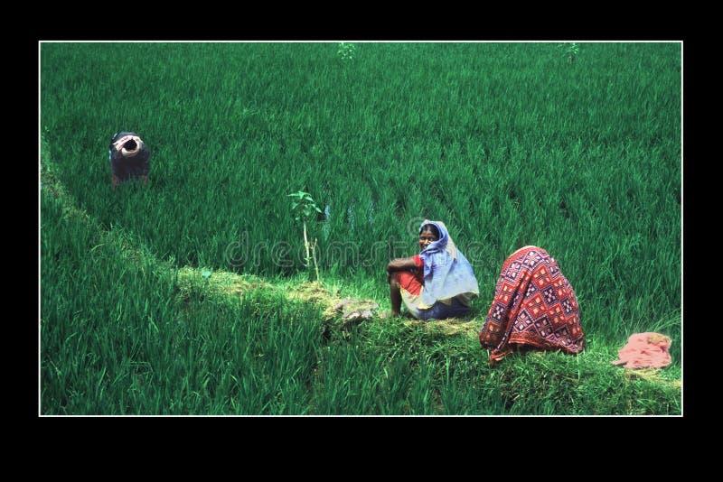 Между полями, среди растительности стоковое фото