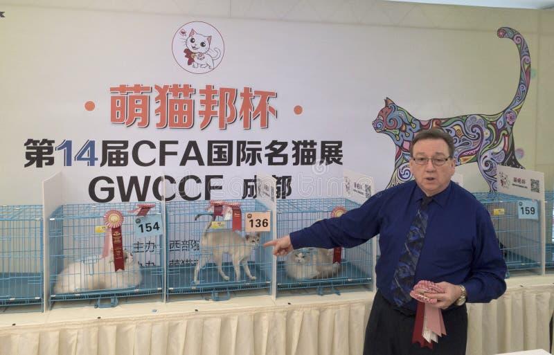Международная выставка кота стоковые изображения rf