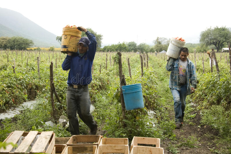 Мексиканские фермеры стоковое изображение rf