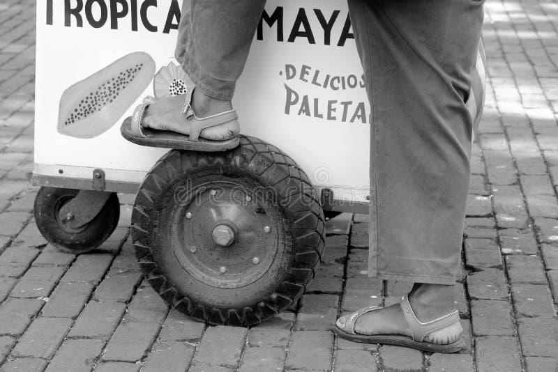 Мексиканськая лоточница стоковая фотография