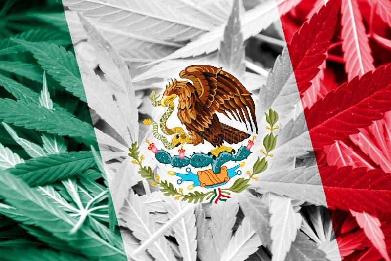 Мексиканський флаг на предпосылке конопли Политика в отношении наркотиков Узаконение марихуаны стоковое изображение rf