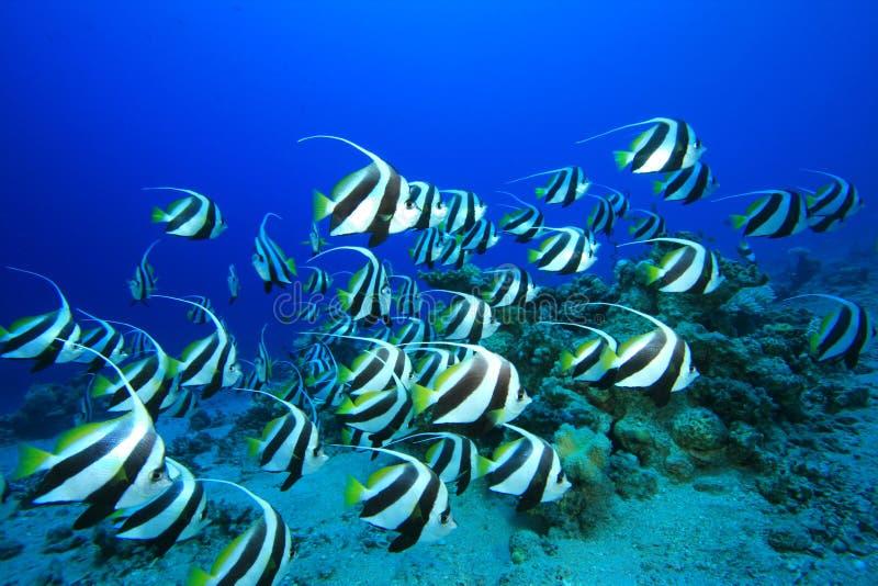 мелководье рыб